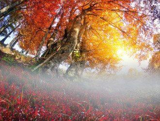 погода_осень_туман_дерев'я