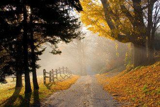 погода_осень_туман_деревья_дорога