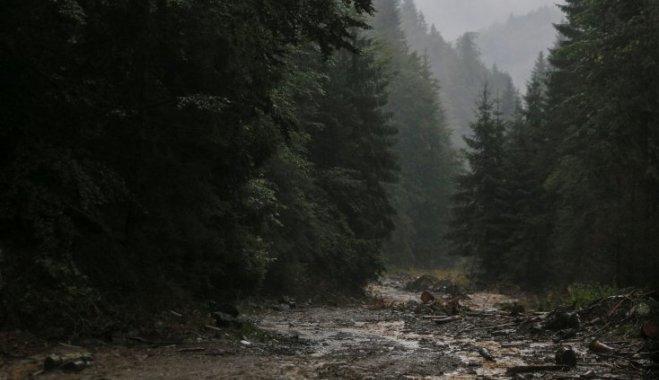 Страх, лес