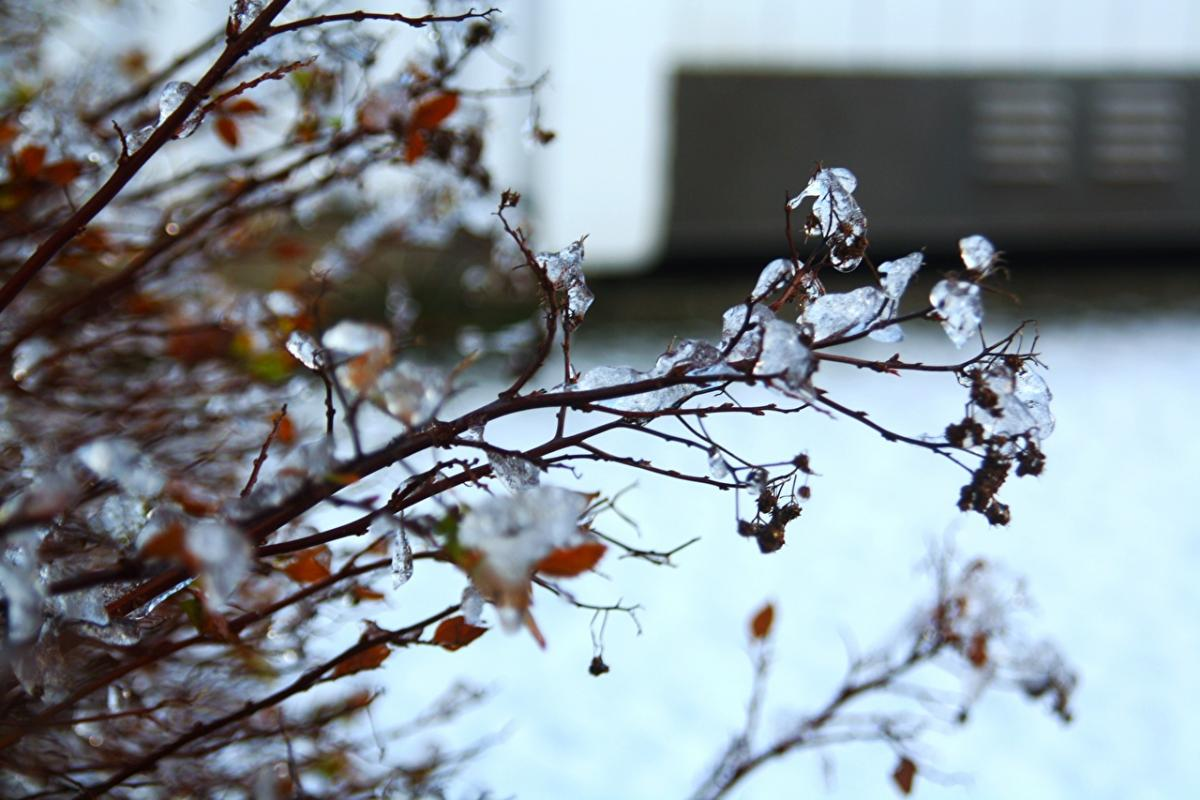 природа_лед_гололед_снег_зима_погода