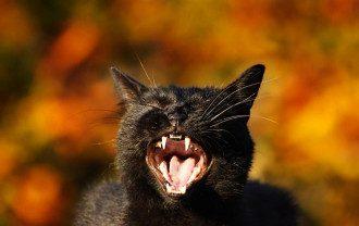 День кішок - смішні картинки з Днем кішок і гіфи