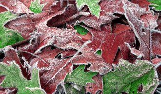 природа_листья_иней_заморозки