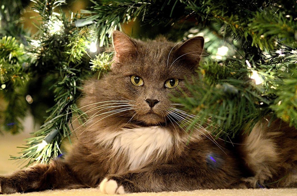 кошка_кот_елка_ель_Новый год