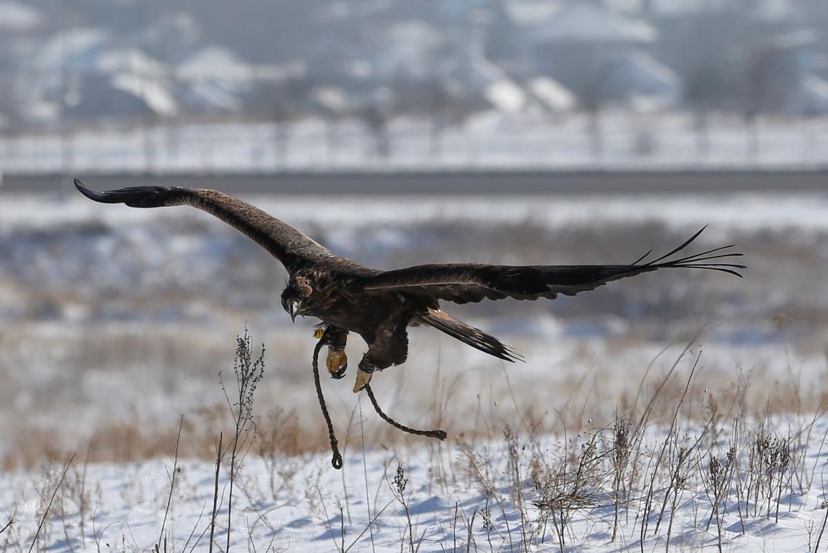 орел_орёл