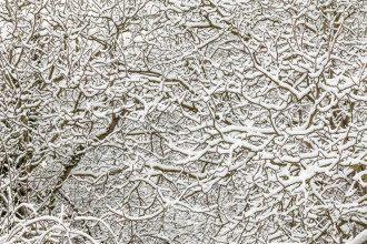погода_снег_деревья