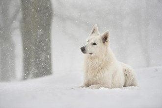 погода_снег_снегопад_метель_зима