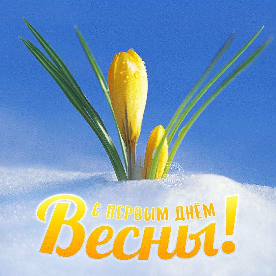 Красивые открытки 1 марта, для дорогого человека
