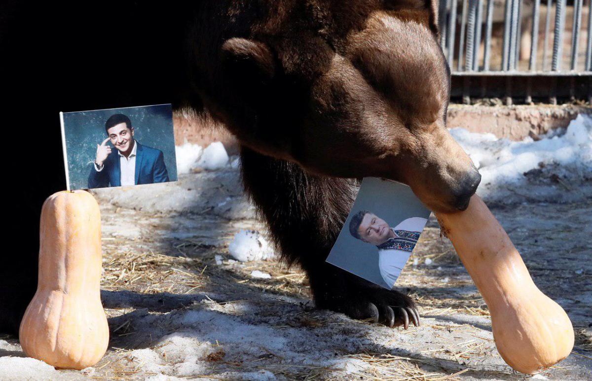 Медведь Буян
