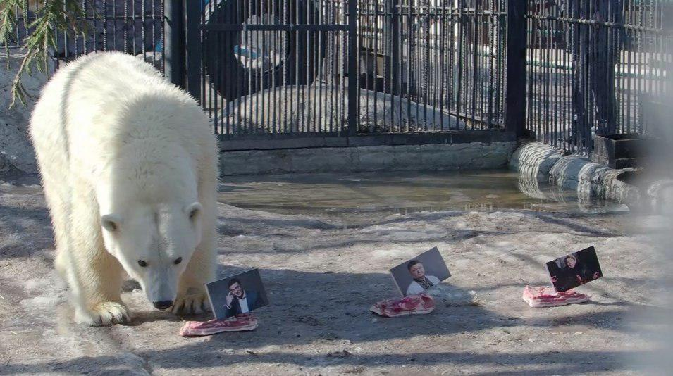 Медведица Аврора остановила выбор на Владимире Зеленском