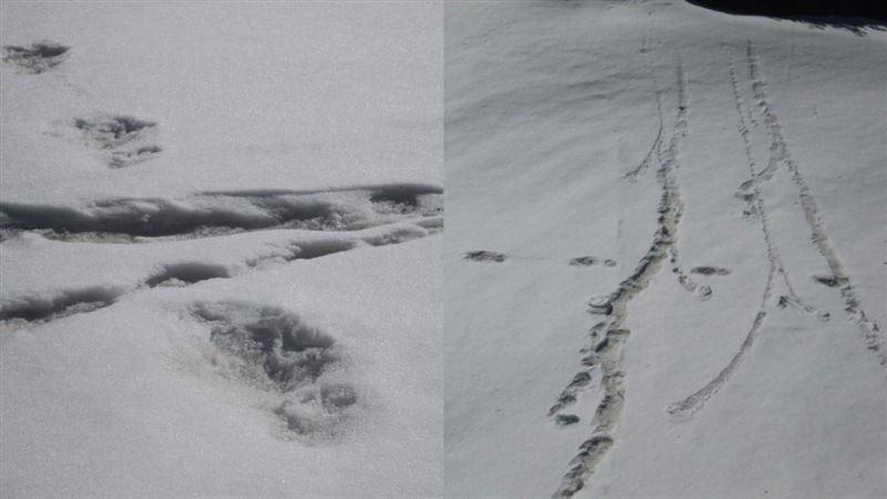 След снежного человека в Гималаях