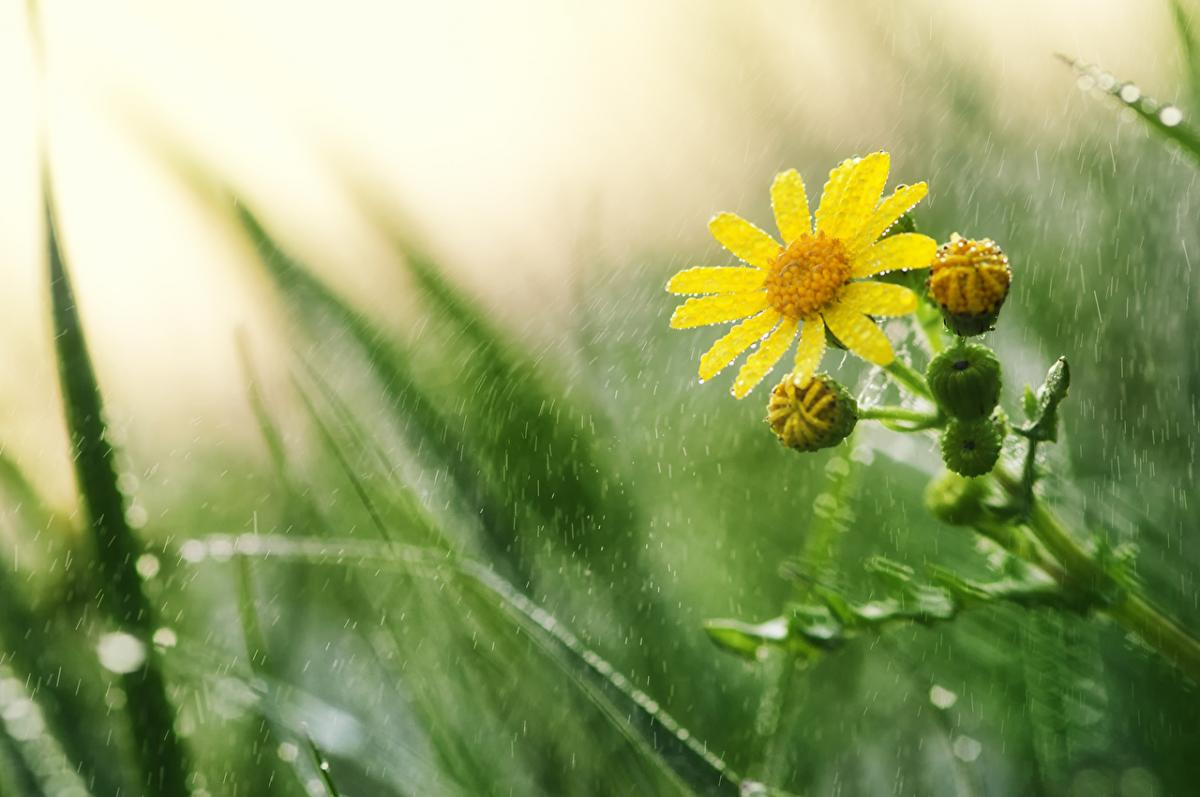 дождь - погода в Украине