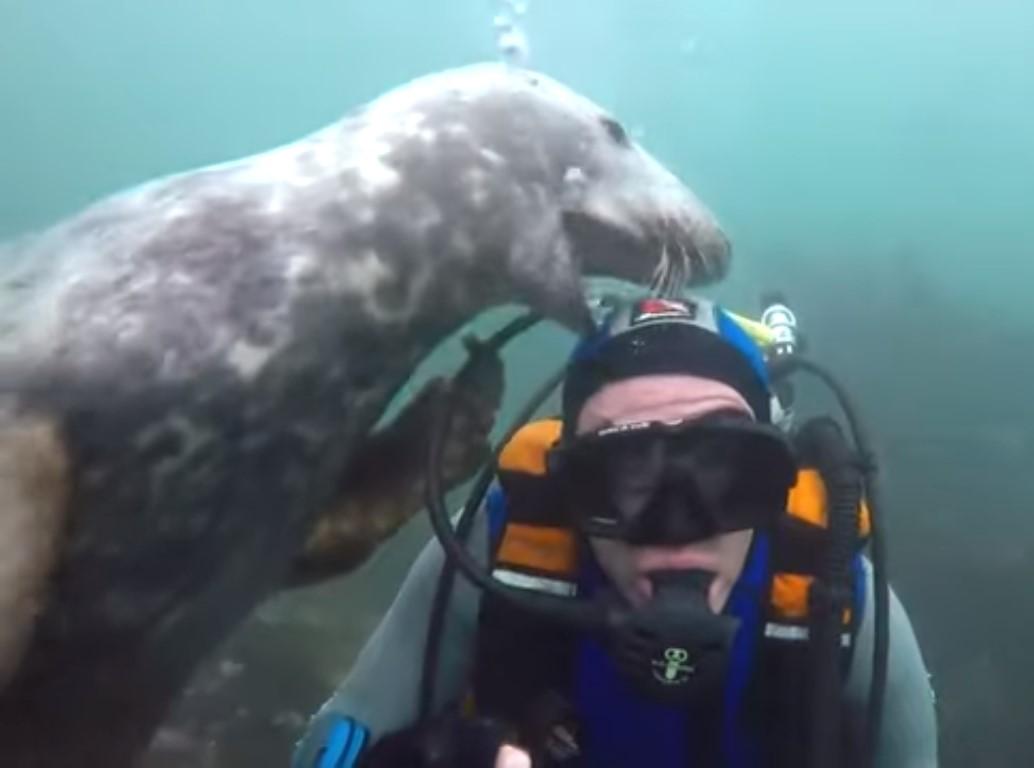 Тюлень стал звездой Сети