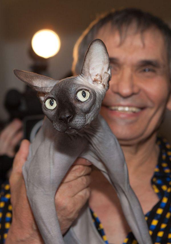 Бари Алибасов, кот