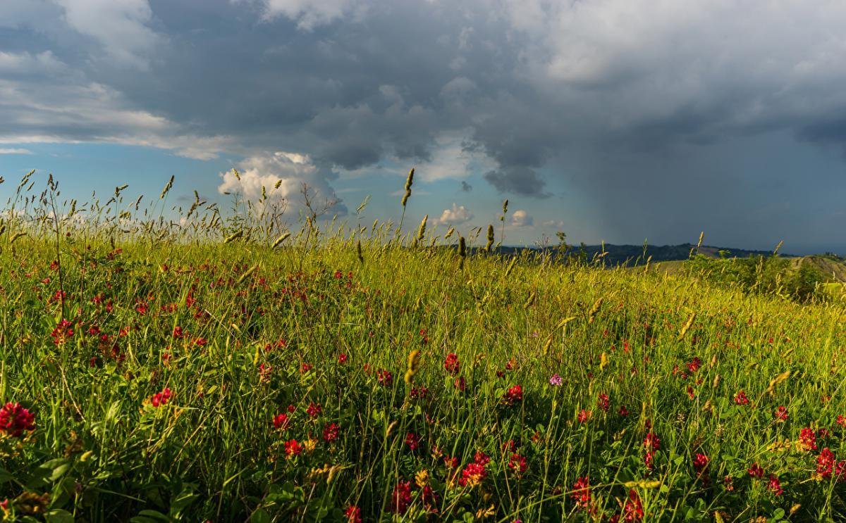 Погода в Украине — В Украине после жары серьезно посвежеет 3 июля, предупредила синоптик
