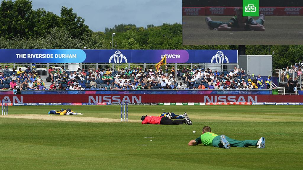 Рой пчел прервал матч ЧМ по крикету
