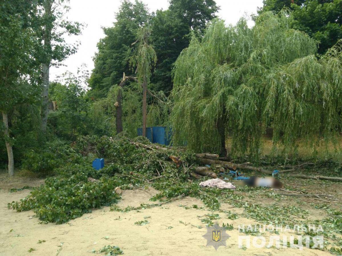 Новости Харьковщины — На Харьковщине в результате падения дерева погибла женщина
