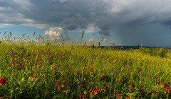 Прогноз погоды на неделю: Украину ждет новый температурный пик – синоптик