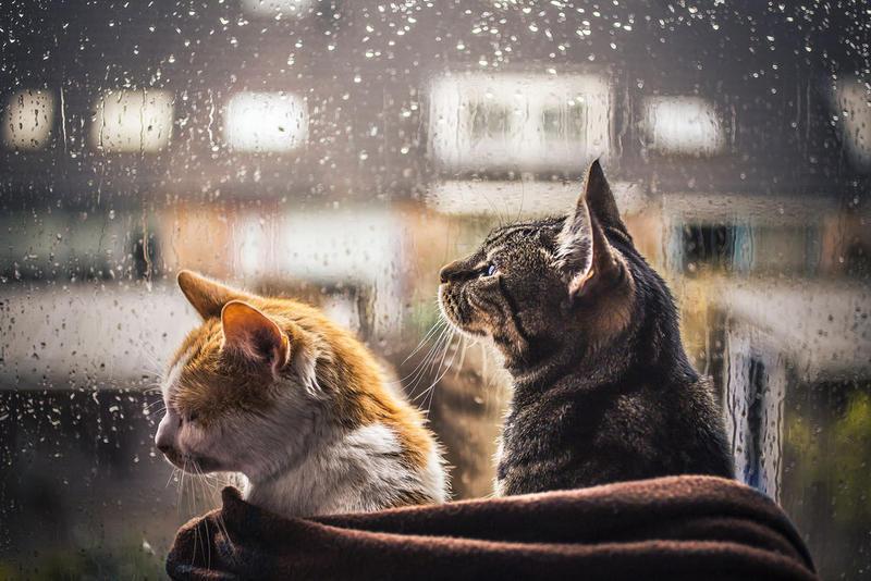 дождь, кот