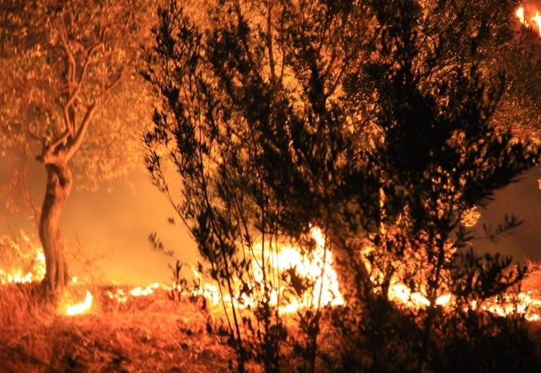 В Турции полыхают пожары