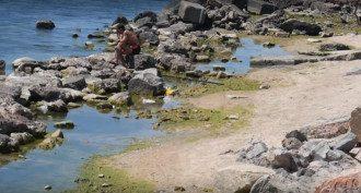 Туристы разнесли отдых на зеленом Азовском море / скриншот