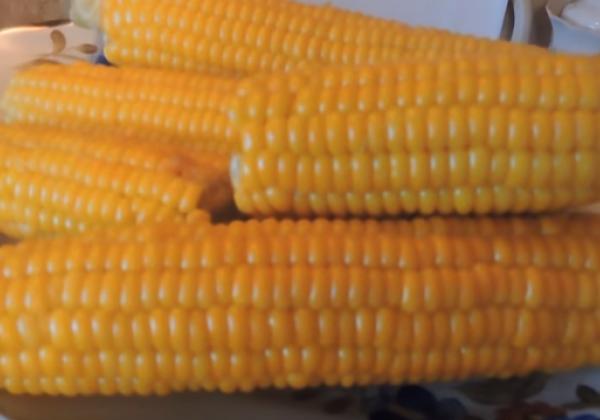 Варить кукурузу бондюэль после закипания нужно около 15 минут