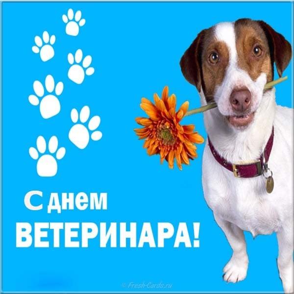 Открытки, поздравление с днем ветеринарного работника открытки