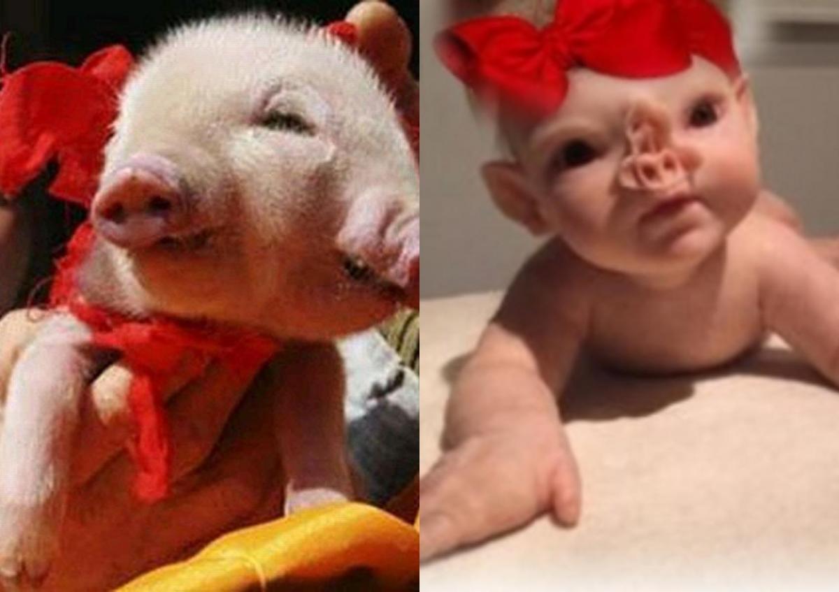 Близнецов-свинорылов украли в Крыму.