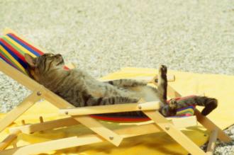 Спека, кіт, погода