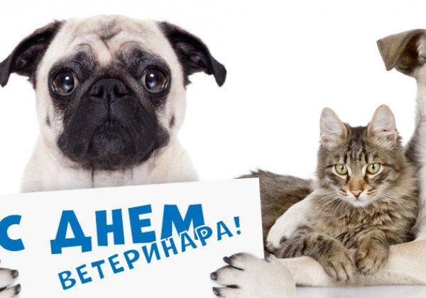 День ветеринара – картинки, открытки и поздравления своими словами