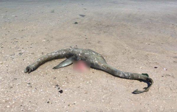 Труп чудовища нашли на пляже в Крыму / vladtime.ru