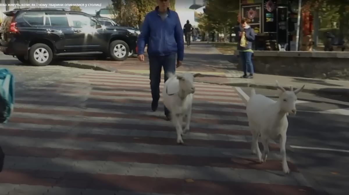 козы киев