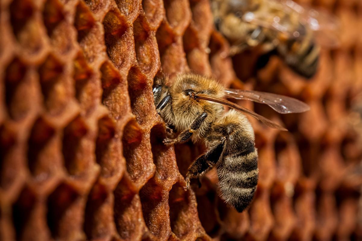 пчелы_пчеловодство