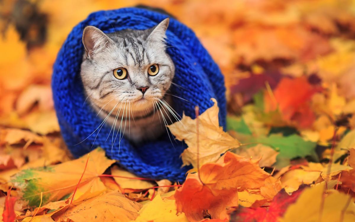 погода, осень, кот