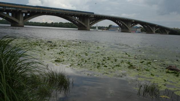Река Днепр цветет