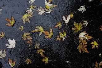 погода осінь