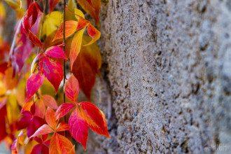 Праздник 12 октября – что нельзя делать в Покровскую родительскую субботу, приметы и традиции дня