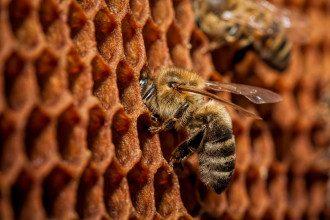 На Ровненщине пчелы убили мужчину
