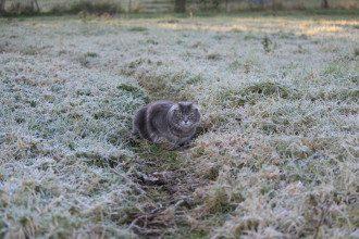 погода, кот, осень, заморозки