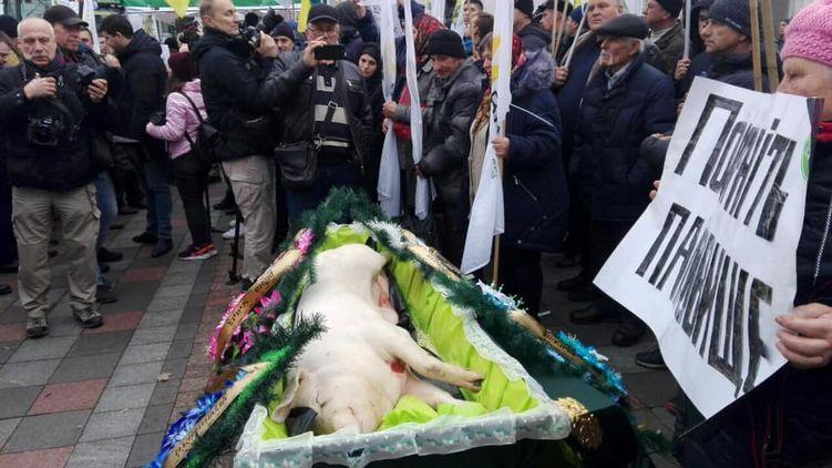 Под стены Рады принесли свинью в гробу