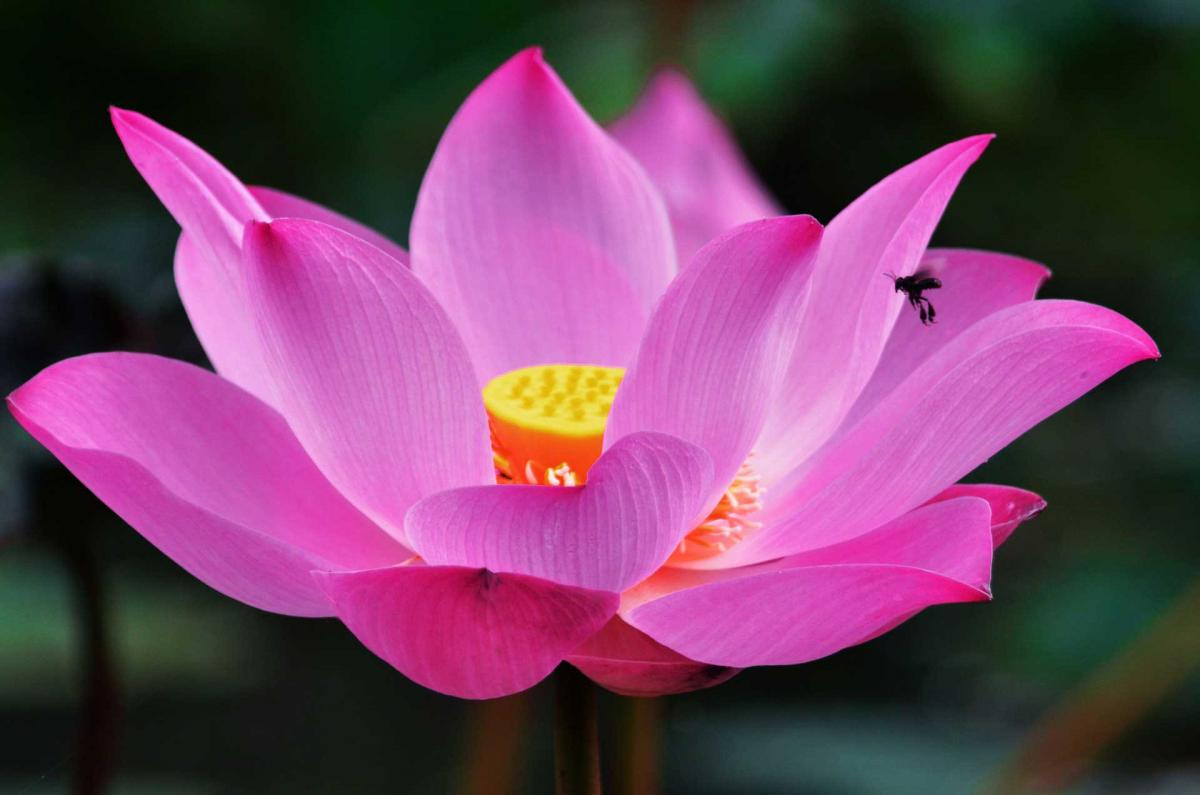 Блеск успеха: астролог рассказала, кого ждет рог изобилия в ноябре