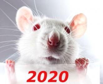 В 2020-м Девам прогнозируется карьерный скачок - Гороскоп на 2020