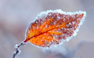 погода, осень, мороз