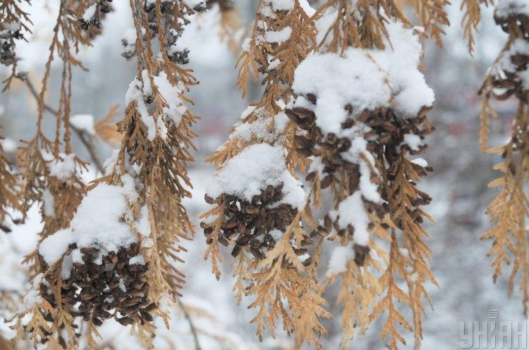 Синоптик сообщил, что на Новый год 2020 днем температура может снизиться до -4 - Погода в Украине