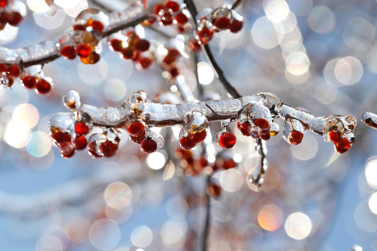 Синоптик спрогнозировал, что в январе 2020-го в Украине погода будет немного теплее, чем в последние годы - Прогноз погоды