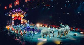 цирк, животные