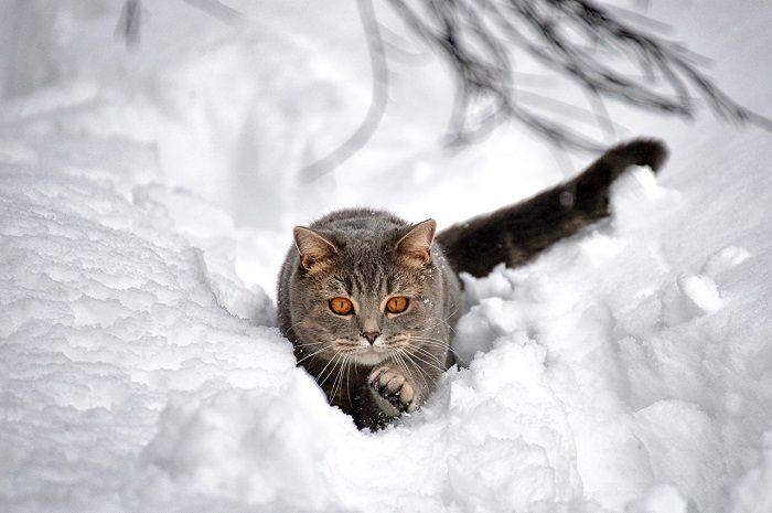 В Чечне целым министерством ищут кота - Новости Чечни