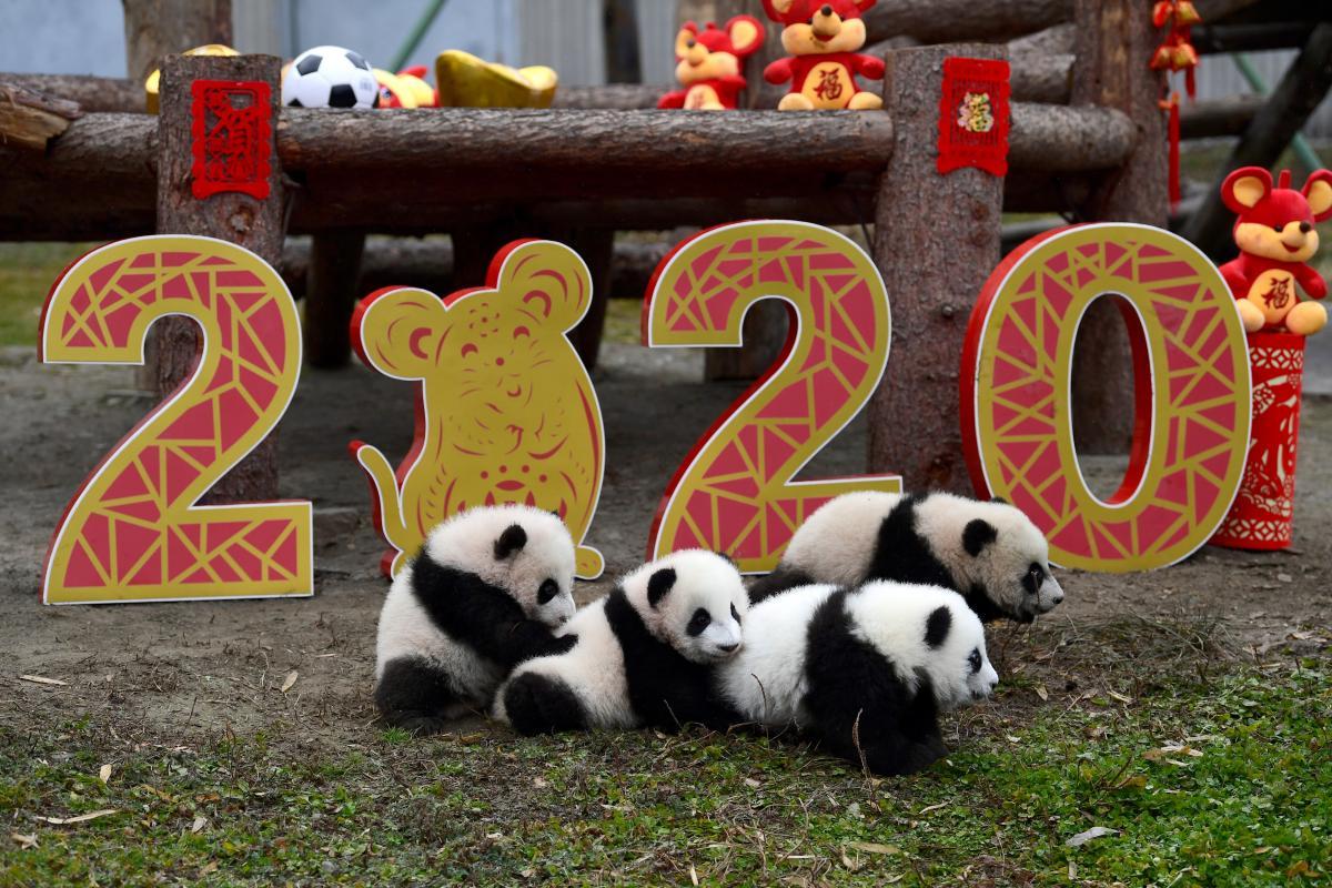Петуху восточный гороскоп 2020 спрогнозировал водоворот страстей - Китайский гороскоп 2020