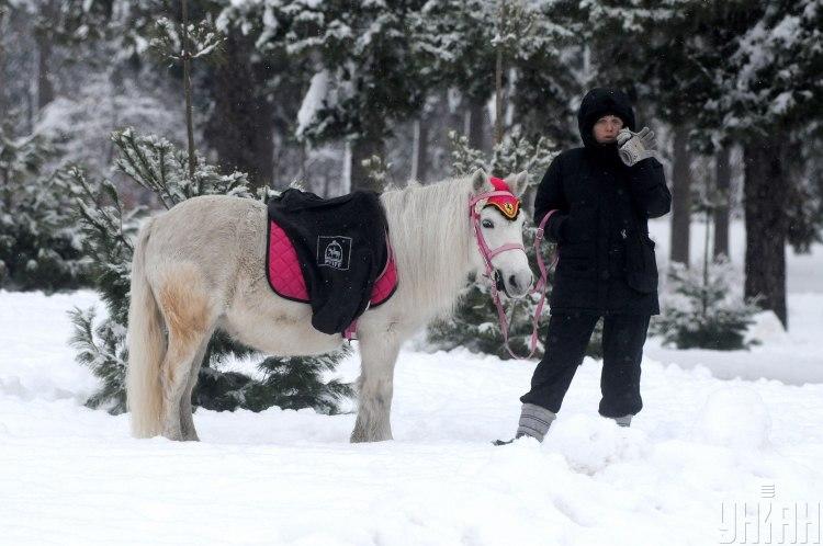 Лошади восточный гороскоп 2020 посоветовал сдерживать себя - Китайский гороскоп 2020