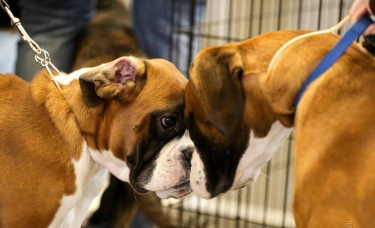 Собаку восточный гороскоп 2020 предупредил о головных болях - Китайский гороскоп 2020
