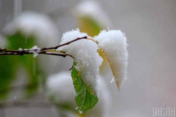 Синоптик сообщил, что в конце января в Карпатах снежный покров может вырасти на 30 см - Прогноз погоды